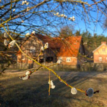 Zdjęcie przedstawia bazie i obiekt ze wsi Królewo w tle