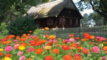 Skupisko kolorowych kwiatów w przydomowym ogródku z chatą w tle.