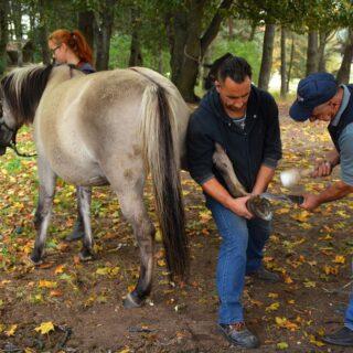 Pokazy werkowania koni. Na zdjęciu widoczne 3 osoby wraz z koniem.