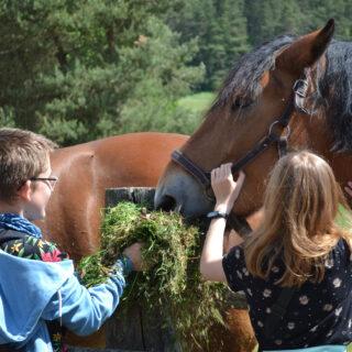 Dzieci karmiące konia podczas wydarzenia.