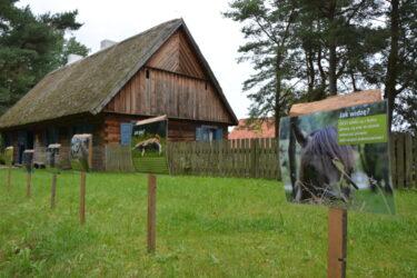 Wystawa ciekawostkami o koniach
