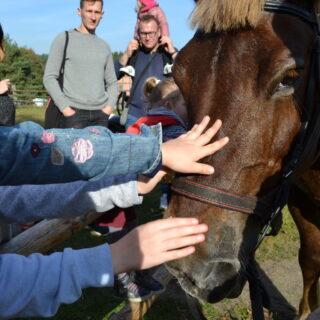 Zdjęcie przedstawia dzieci głaszczące konia