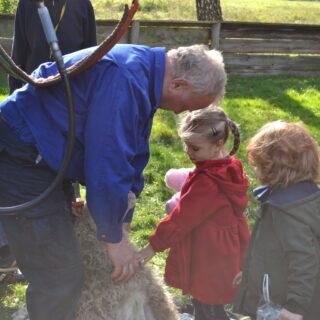 Dziecko głaszczące owcę